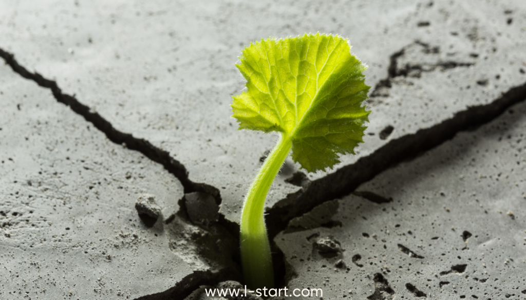 focus136-resilience entrepreneuriale par l-start